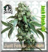 Sensi Jack Flash #5 buy female cannabis strain UK